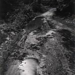 Wynn Bullock Rain on the Road Palo Colorado Road @ Lichtundfire